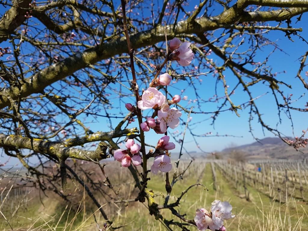 schön wars.. Frühling ist da..