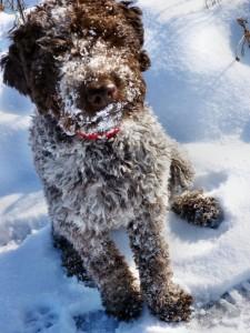 Schnee mag sie gerne