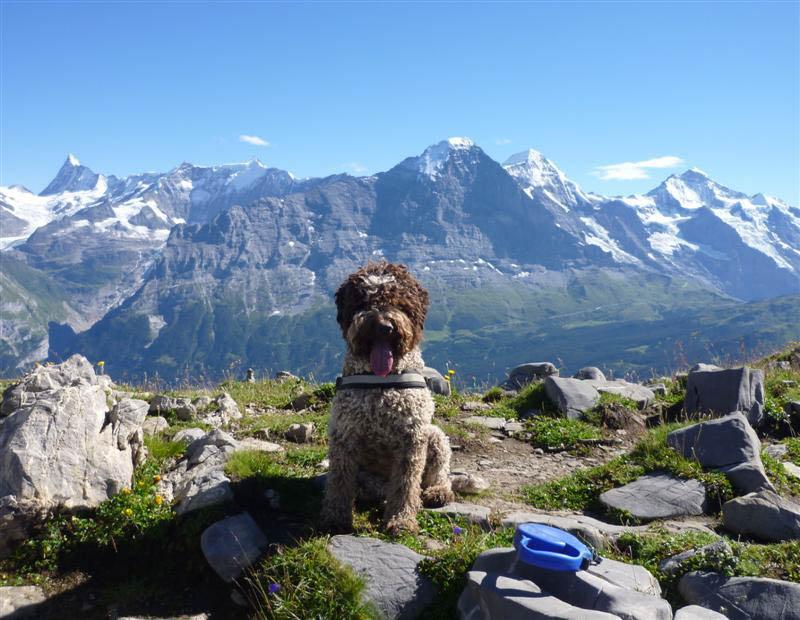 Fila auf unseren zweitägigen Tour zum Faulhorn in der Schweiz