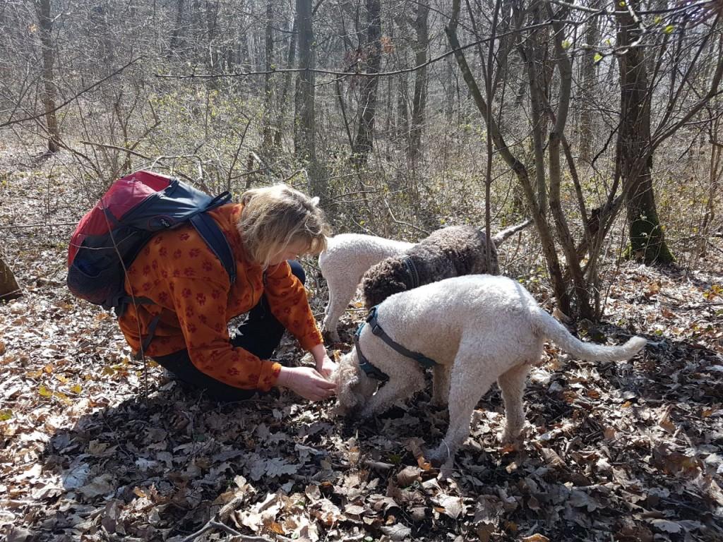 NSG Ebnet, die Hunde finden immer etwas zum buddeln..