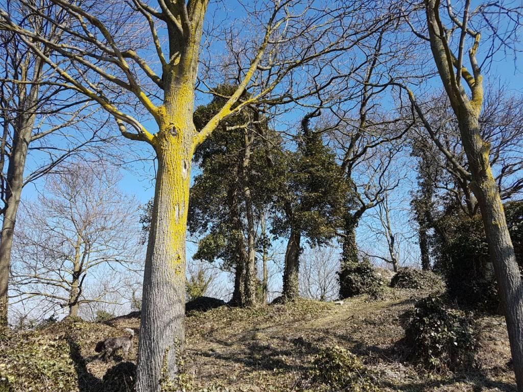 Naturschutzgebiet Büchsenberg