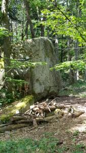 im Wald sind einzelne Steine von Rhonegletscher zu finden