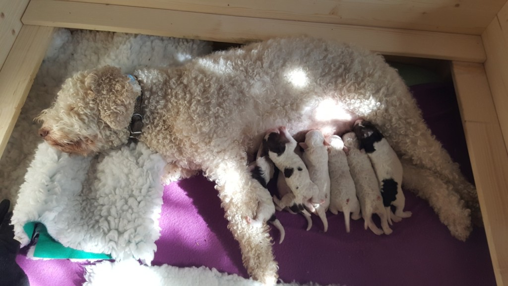 Die Welpen wurden selbständig geboren, sie machte das echt gut. Die ersten Vier innerhalb von zwei Stunden und die ANEMONE wurde Stunde später geboren