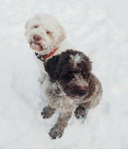 Calypso und Fila im Dezember 2020