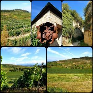 viele Panoramablicke über die Weinreben in alle Richtungen